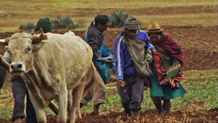 Peruvian villagers farming