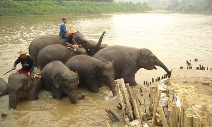 Thailand elephants in river