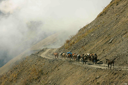 Herding horses along mountainside road
